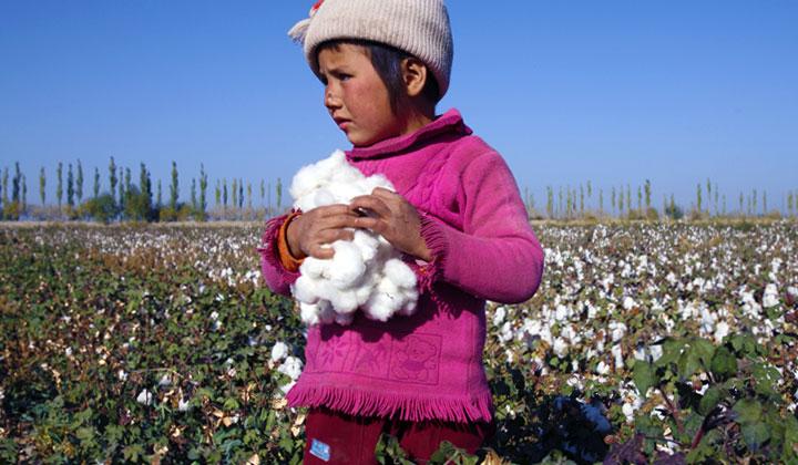 Cotton Picking